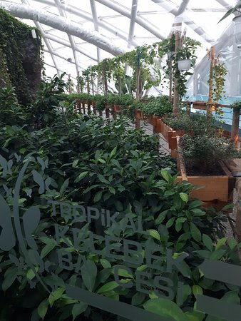 bahçe bitki yoğunluğu fazla ve güzel tanzim edilmiş