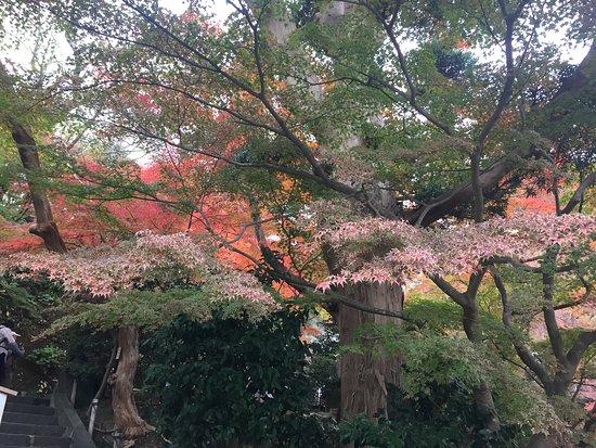 Hase-dera Temple: 1