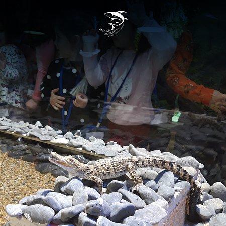 Emaar Akvaryum & Sualti Hayvanat Bahcesi: Yavru Timsahlarımız