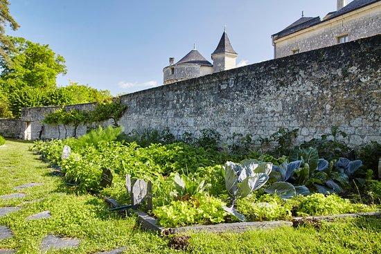 Candes-Saint-Martin Photo