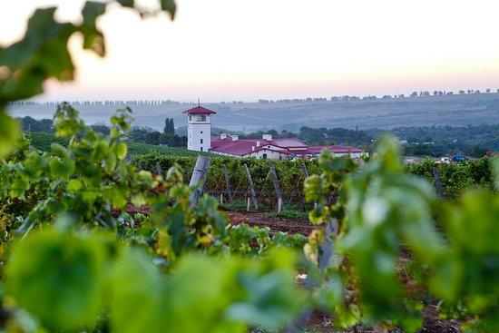 Moldavanskoye, Nga: Винный туризм позволяет каждому пробовать вино в месте его производства, увидеть, как именно рождается тот или иной вкус, узнать тайну его происхождения в природе. Вы не просто отдохнете и продегустируете вина, но и посетите увлекательную экскурсию, в ходе которой побываете на виноградниках, узнаете о технологиях производства и традициях виноделия. Если вы хотите попробовать одни из лучших российских вин и сыров, приглашаем вас в долину Лефкадия!