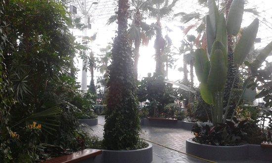 Chicago, IL : Garden Atrium