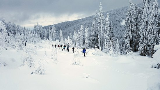 Harghita County, โรมาเนีย: Leave the crowded ski slopes behind and discover frozen waterfalls, sunny peaks and forests that smell of pine. We'll walk on the untouched snow listening to bird songs while reading the trails of bears, deer, boars and other animals crossing our path.  Whether you only have a few hours or you would like to spend a whole week touring– we've got you covered. Choose your preferred route and our guide will bring you equipment. Don't forget to bring layered clothing to be comfortable.
