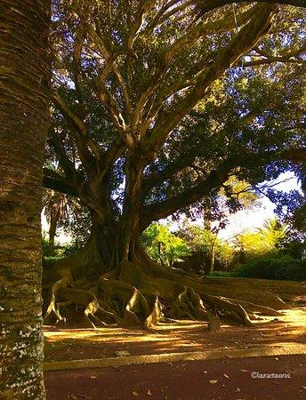 Jardim António Borges- Circuito dos Jardins.