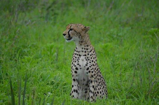 Ndaki Safari