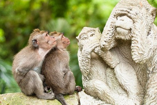 Bali Monkey Forest, Mengwi Temple...