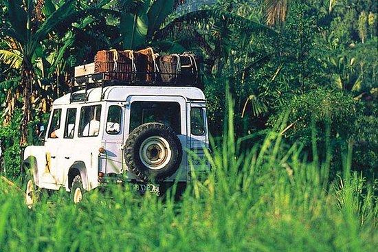 小团游:4WD的巴厘岛雨林