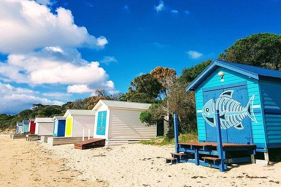 莫宁顿半岛一日游从墨尔本出发