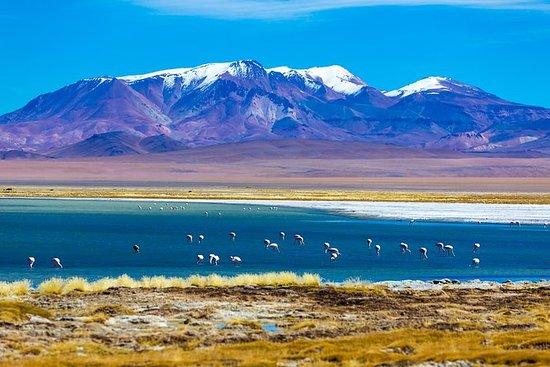 Atacama Salt Flat Day Trip from San...