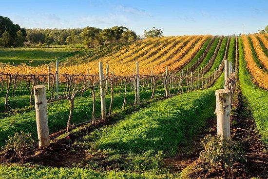 アデレードからマクラーレン・ヴェール・ワイン地域ツアーがあるビクター・ハーバ…
