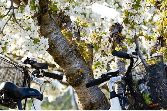 普罗旺斯和来自Saint-Rémy-de-Provence的电动自行车Car...