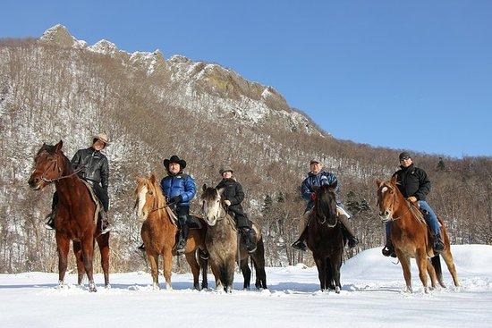 Sapporo Horseback-Riding Tour