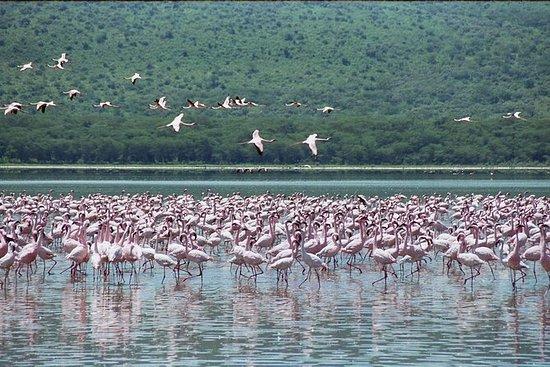 Lake Nakuru National Park Day Tour fra...