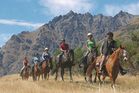 Demi-journée Walter Peak Horse Trek...