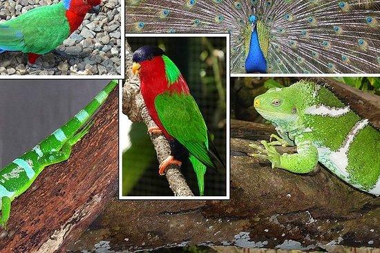 Excursión de un día a Kula Eco Park y...