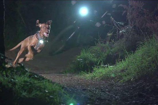 Tour di caccia al tartufo notturno di