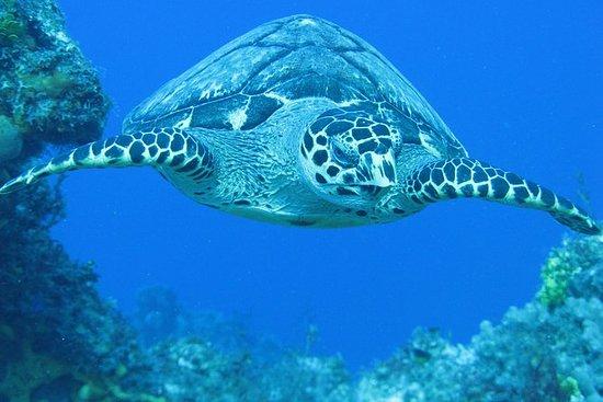Keine Zertifizierung Scuba Diving
