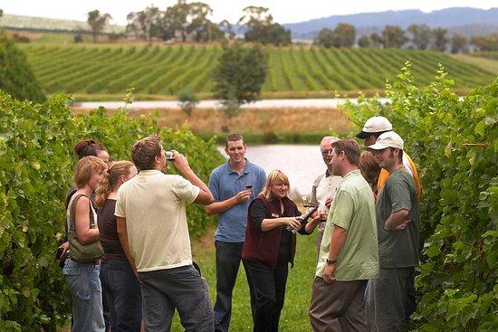 Excursión de vino La Rioja con...