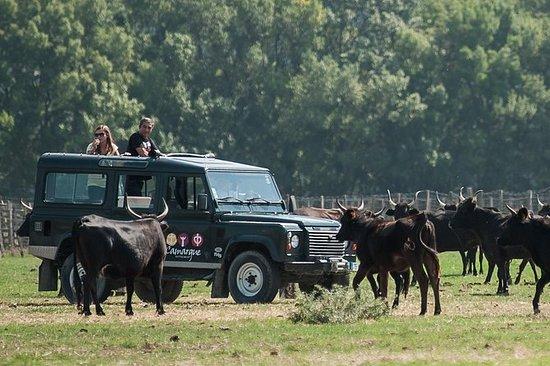Safari en 4x4 en Camargue au départ...