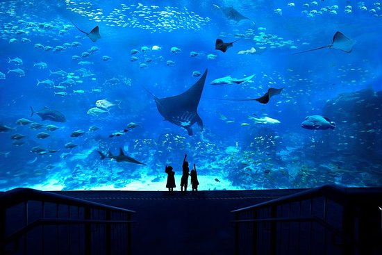Sørøst-Asia (SEA) Aquarium Admission...