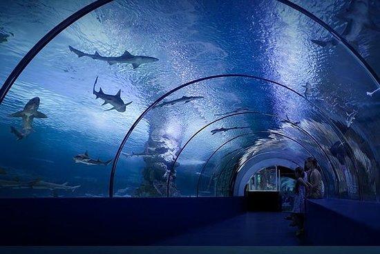 Antalya Aquarium Ticket with Optional...