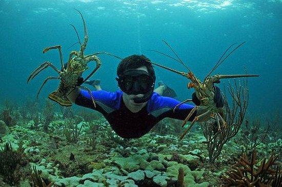 Chasseur de fruits de mer privé avec...
