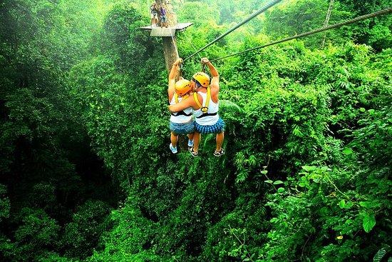 Rainforest Canopy Zipline Adventure...