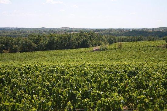 Tour do vinho Gaillac saindo de...