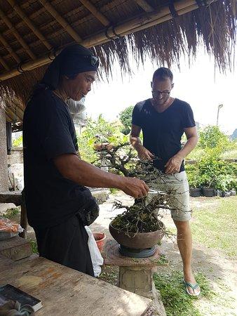 beginners class bonsai