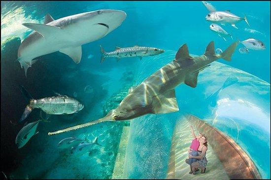 Entdecken Sie Atlantis