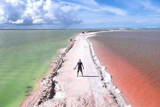 Rio Lagartos, Coloradas & Cenote from Playa del Carmen: Rio Lagartos, Coloradas & Ek Balam Cenote