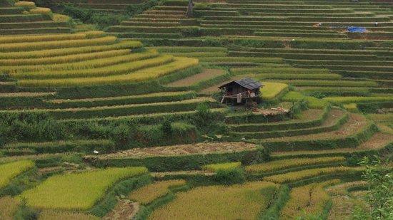 Mu Cang Chai, Vietnam: Lim Mong Village
