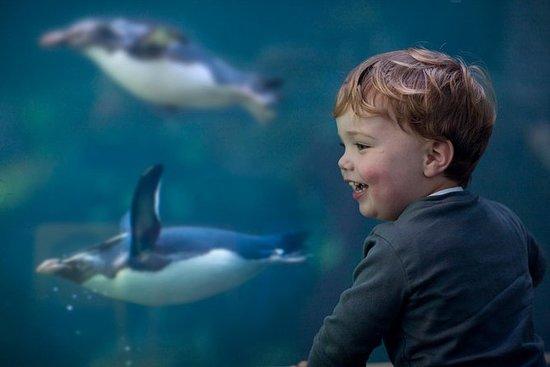 免排队:两个海洋水族馆入场券