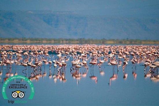 タンザニア野生動物の出会い - 6日間