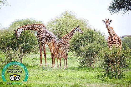 タンザニアSimba Safari - 5 Days