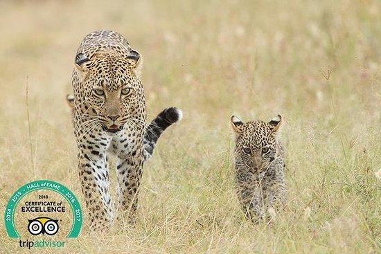 Tanzania Classic: 7 giorni