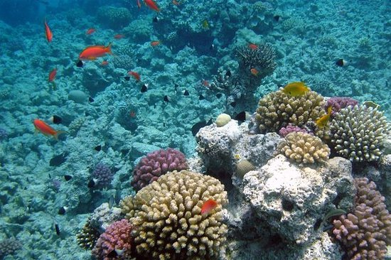 Giftun Island Budget Snorkeling Trip...
