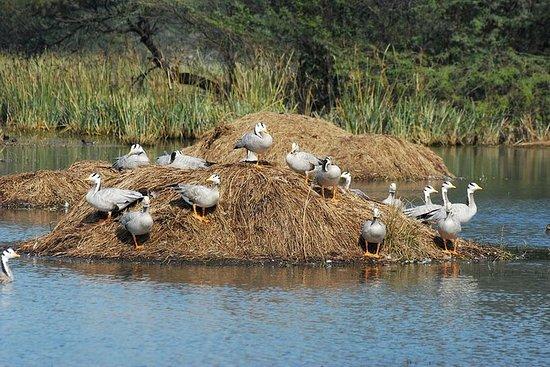 Sultanpur Bird Sanctuary Tour in der...
