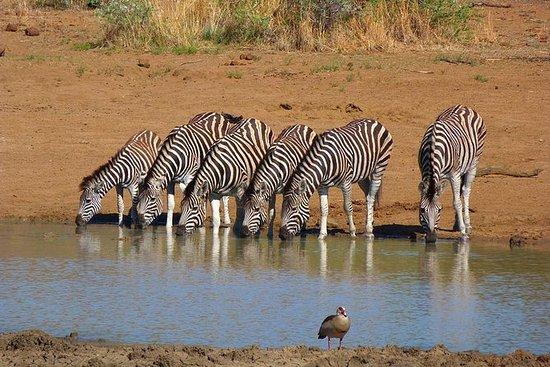Pilanesberg Game...