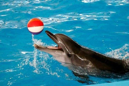 Phuket Dolphin Show Ticket