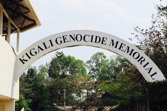 2天卢旺达山地大猩猩体验