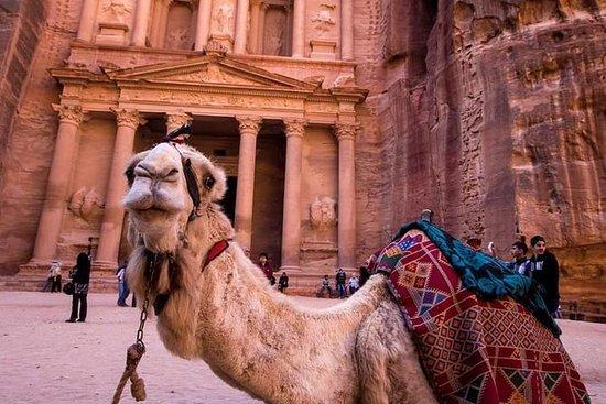 Petra & Wadi Rum - En dags tur