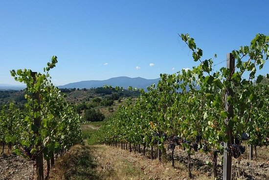 Wine tours-Tasting of local wine and...