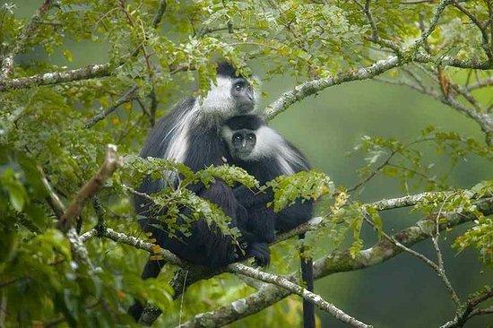 3 Tage Nyungwe National Park Erfahrung
