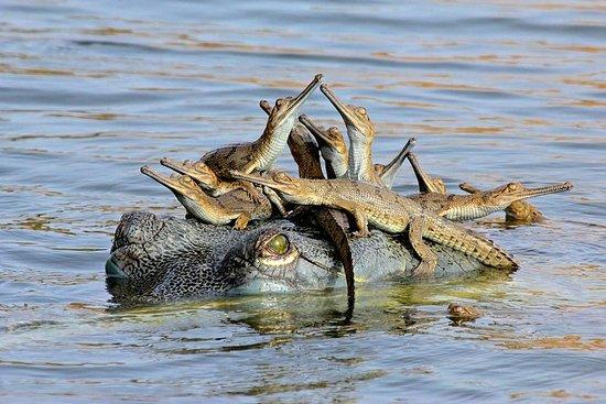 Templos de Khajuraho y Ken Alligator...