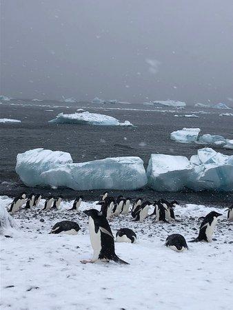 Антарктический полуостров: Lots of ice flows to watch bobbing about
