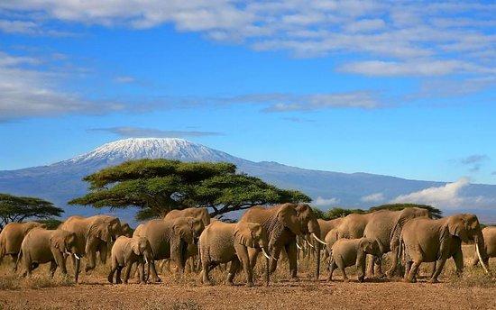 Kenya Wildlife Tours & Safaris