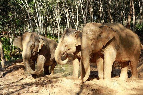 Phuket Elephant Heaven