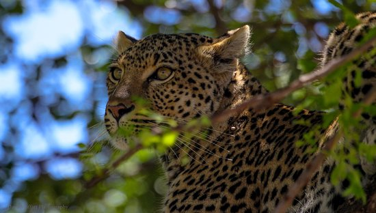 Khakiweed Photographic Safaris