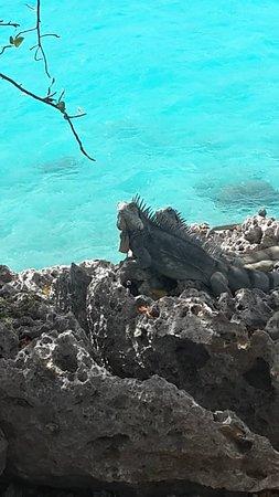 Explorer Tours Bonaire: Iguana 1000 Steps